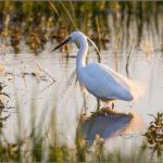 birdwatching_ornitologia_obserwacja_ptakow_Kent_ptaki