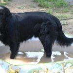 Sam – WILDEST SAM THE FIREFIGHTER z BasiSfory – w baseniku dla szczeniaczków
