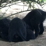 Szczeniaczki w hodowli z BasiSfory